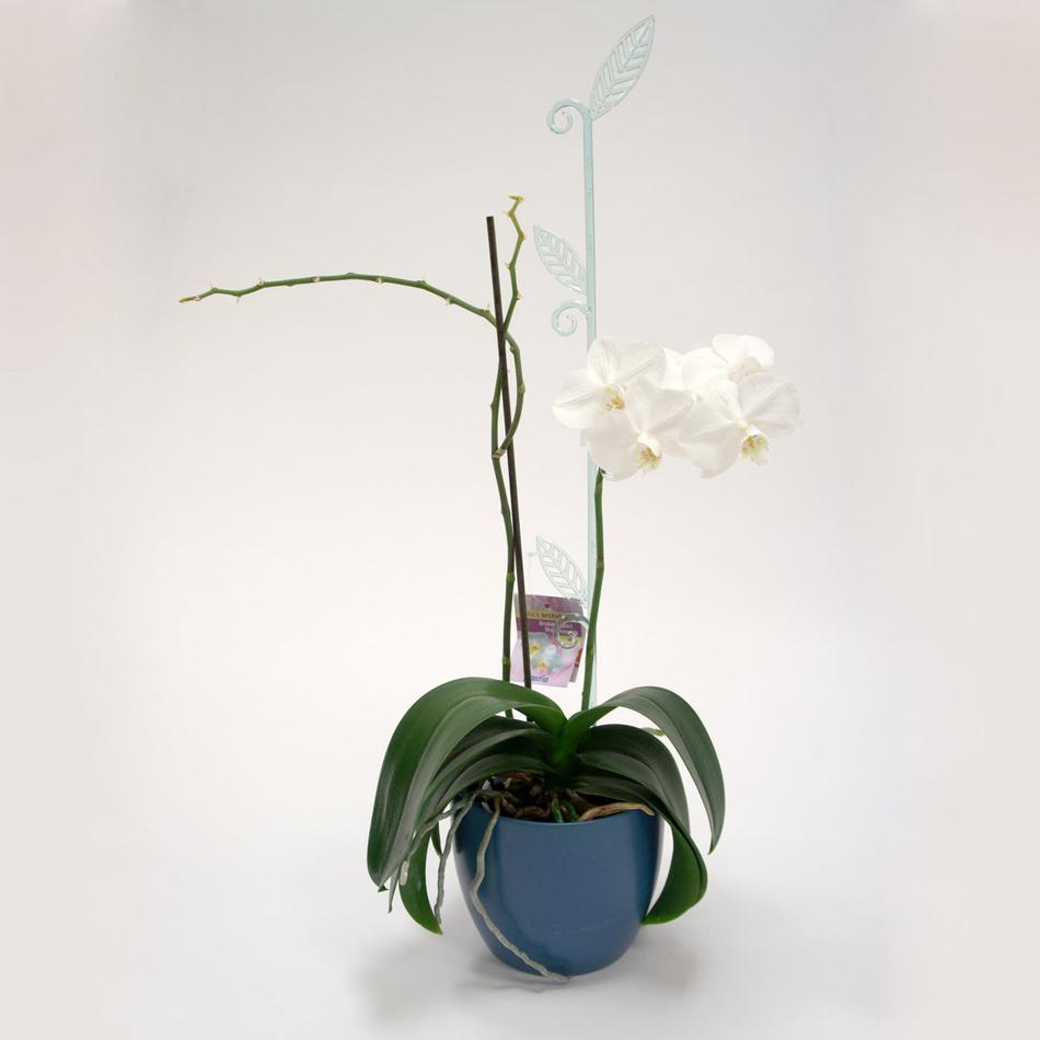 Tyčka k orchideji list, sklo, 2 ks, Plastia
