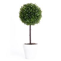 Buxusový stromček v kvetináči biela