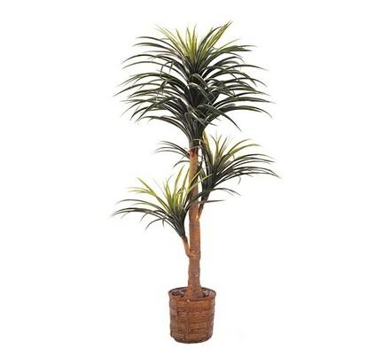 Strom dracena, 160 cm, zelená, 160 cm