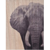 Obraz na dreve Elephant, 28 x 38 cm