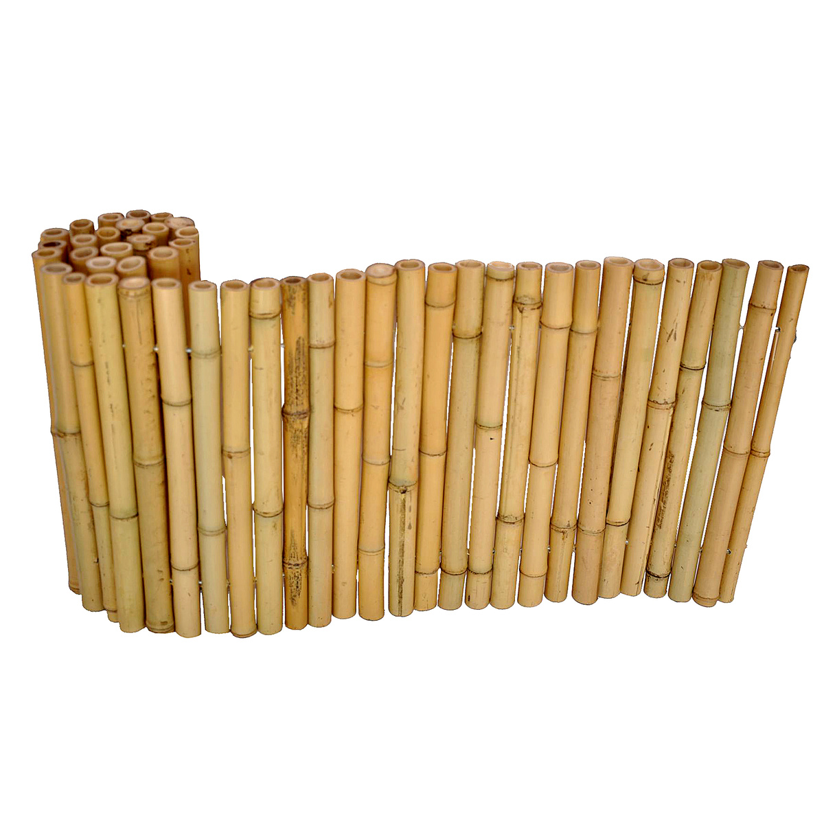 Bambusový plotík, Axin Trading