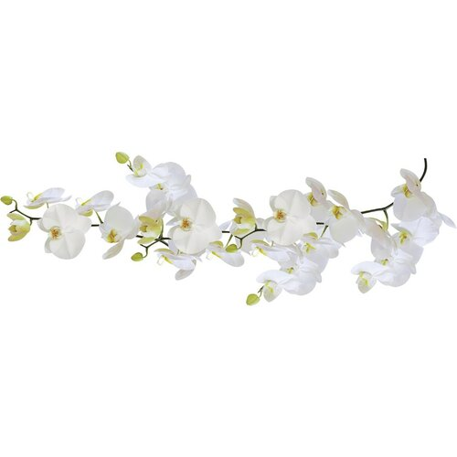 Samolepka Orchidej, Kleine Wolke