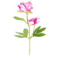 Sztuczny kwiat Piwonia ciemnoróżowa, 58 cm