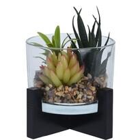 Koopman Tanta dekor mű pozsgás növény  összeállítás, 14 cm