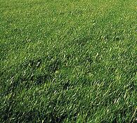 Zázračný trávník, Captain Green