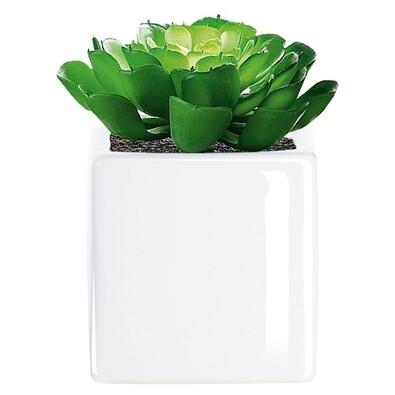 ASA Selection umělá květina v kvetináči succulents 11643