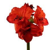 Umělá květina - Amarilis, hnědá