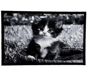 Vnitřní rohožka Kotě, 40 x 60 cm, bílá + černá, 40 x 60 cm